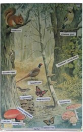 Serie - Callograph Nature Wall Pictures